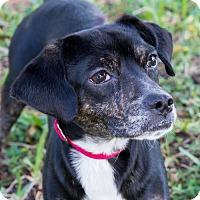 Adopt A Pet :: Motley - Miami, FL