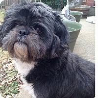 Adopt A Pet :: George - LEXINGTON, KY