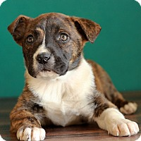 Adopt A Pet :: Hope - Waldorf, MD
