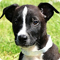 Adopt A Pet :: Luther - Glastonbury, CT