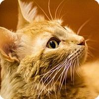 Adopt A Pet :: Abilene - LaJolla, CA