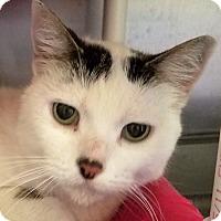 Adopt A Pet :: Puddy - Adrian, MI