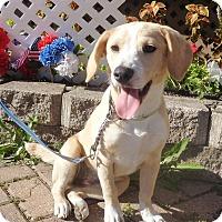 Adopt A Pet :: Ulani - West Chicago, IL