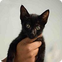Adopt A Pet :: ROSARIA - Atlanta, GA