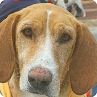 Adopt A Pet :: Bessie aka Honey - Rockville, MD