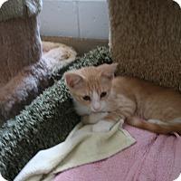 Adopt A Pet :: JoJo - Sherman Oaks, CA