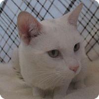 Adopt A Pet :: Stan - Lloydminster, AB