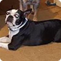 Adopt A Pet :: Cammie - Van Vleck, TX