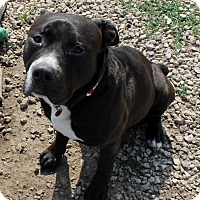 Adopt A Pet :: Obediah - Grinnell, IA
