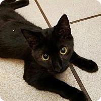 Adopt A Pet :: Boone - Littleton, CO