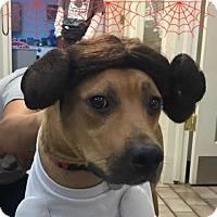 Adopt A Pet :: Phoebe - Tulsa, OK