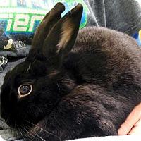 Adopt A Pet :: Ebony - Jefferson, WI