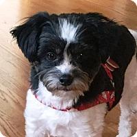 Adopt A Pet :: RILEY - Eden Prairie, MN
