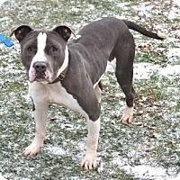 Adopt A Pet :: Lug - Akron, OH
