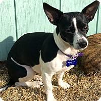 Adopt A Pet :: Addison - Springfield, MO