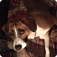 Adopt A Pet :: Bethany - Cedar Rapids, IA