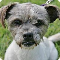 Adopt A Pet :: ROCKWELL - West Palm Beach, FL