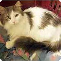 Adopt A Pet :: Natasha - Arlington, VA