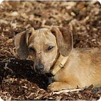 Adopt A Pet :: Independance - Ft. Myers, FL