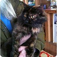 Adopt A Pet :: Puddles - New Egypt, NJ