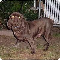 Adopt A Pet :: Coco - Tacoma, WA