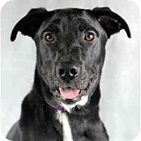 Adopt A Pet :: Elliot - Chicago, IL