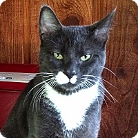 Adopt A Pet :: Peter - Victor, NY
