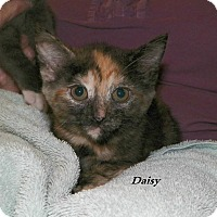 Adopt A Pet :: Daisy 2 - Dover, OH