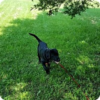 Adopt A Pet :: Bear - Winchester, VA