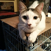 Adopt A Pet :: Popeye - Salem, OR