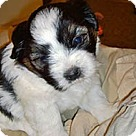 Adopt A Pet :: Dixie's Pup Donut