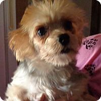 Adopt A Pet :: Bluboy - Crump, TN