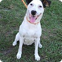 Adopt A Pet :: Dixie - Dumfries, VA