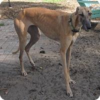 Adopt A Pet :: Bitty - Lexington, SC