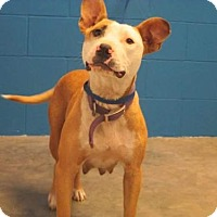 Adopt A Pet :: Evie - Nashville, TN
