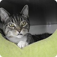 Adopt A Pet :: Princess - Port Jervis, NY