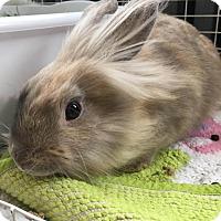 Adopt A Pet :: Goku - Conshohocken, PA
