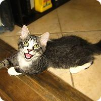 Adopt A Pet :: Frankie - Edmond, OK