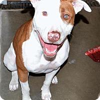 Adopt A Pet :: Coco - San Jacinto, CA