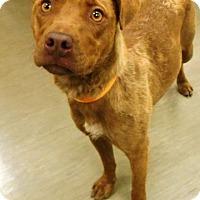 Adopt A Pet :: Misty - Redding, CA