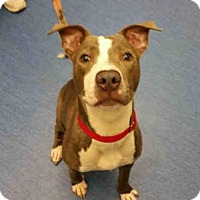 Adopt A Pet :: STAR - Pittsburgh, PA