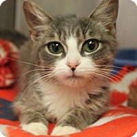 Adopt A Pet :: Beans - Naperville, IL
