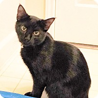Adopt A Pet :: Swiper - Arlington/Ft Worth, TX