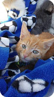 Domestic Shorthair Kitten for adoption in Oakhurst, New Jersey - Dexter
