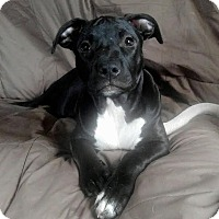 Adopt A Pet :: Garnet - Detroit, MI