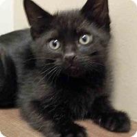 Adopt A Pet :: Donner - Shorewood, IL