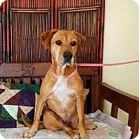 Adopt A Pet :: Purdy - Atchison, KS