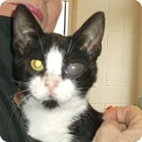 Adopt A Pet :: FINLAY - Gloucester, VA