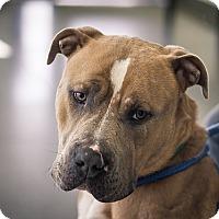 Adopt A Pet :: Ace - Berkeley, CA