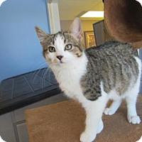 Adopt A Pet :: Samantha - Northfield, MN